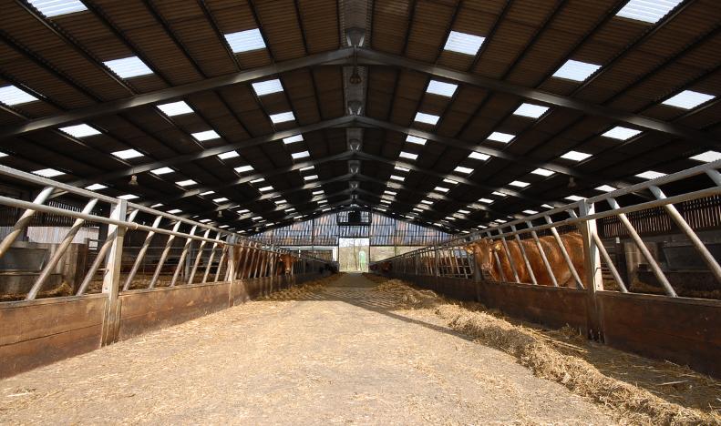 livestock shed