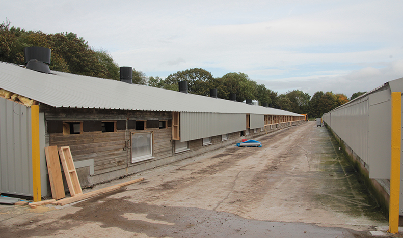 poultry shed refurbishment after