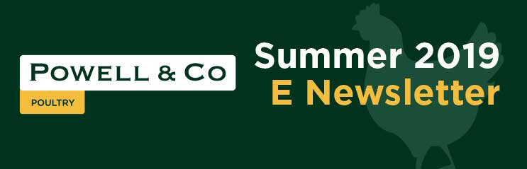 Powell & Co Summer 2019 E-Newsletter